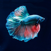 Profile picture of jehanlepoisson