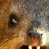 Profile picture of TheUnrulyWombat