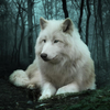 Profile picture of whitewolf_1972